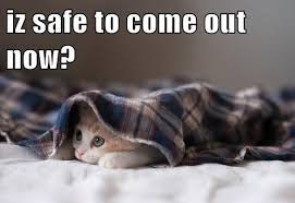 kitten flannel safe from spoilers