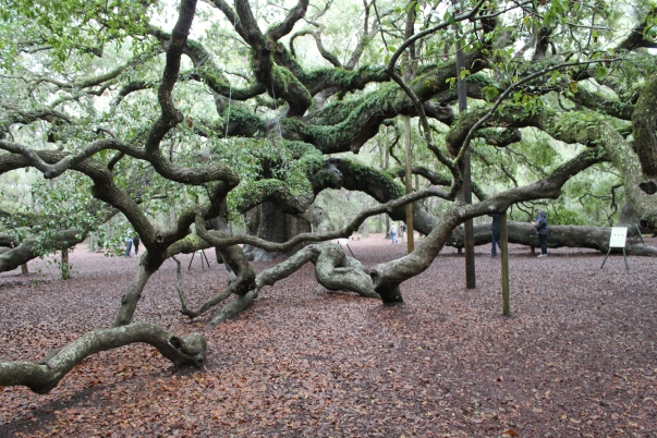 angel-oak-1-22-17-001
