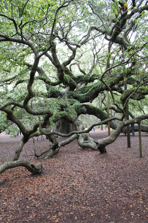 angel-oak-1-22-17-003