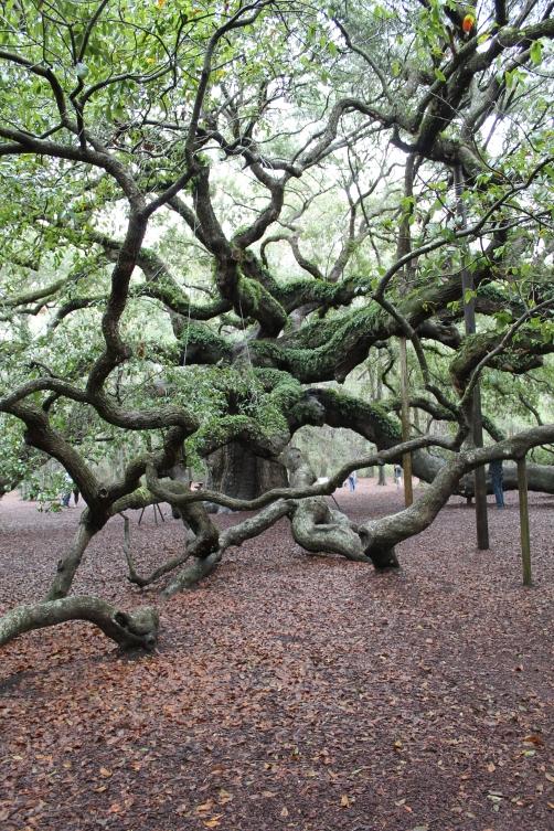 angel-oak-1-22-17-003