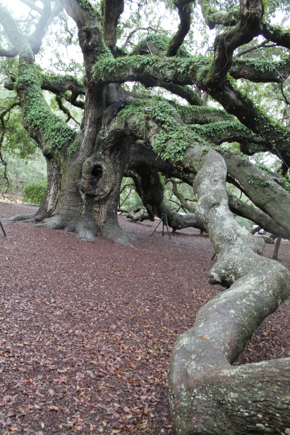 angel-oak-1-22-17-029
